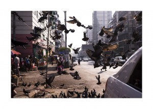 bird_congestion_by_Jan Rockar
