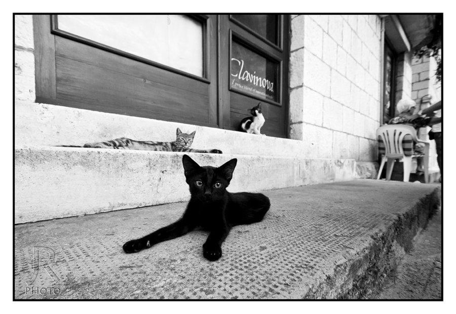 cats_of_dubrovnik_12_by_jan-rockar