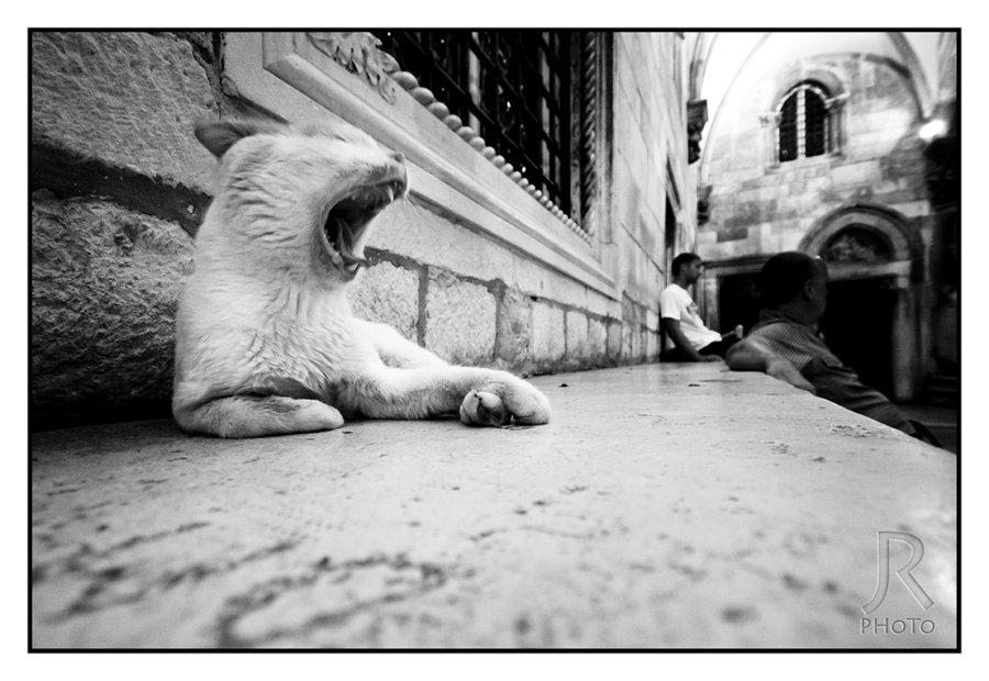 cats_of_dubrovnik_13_jan-rockar