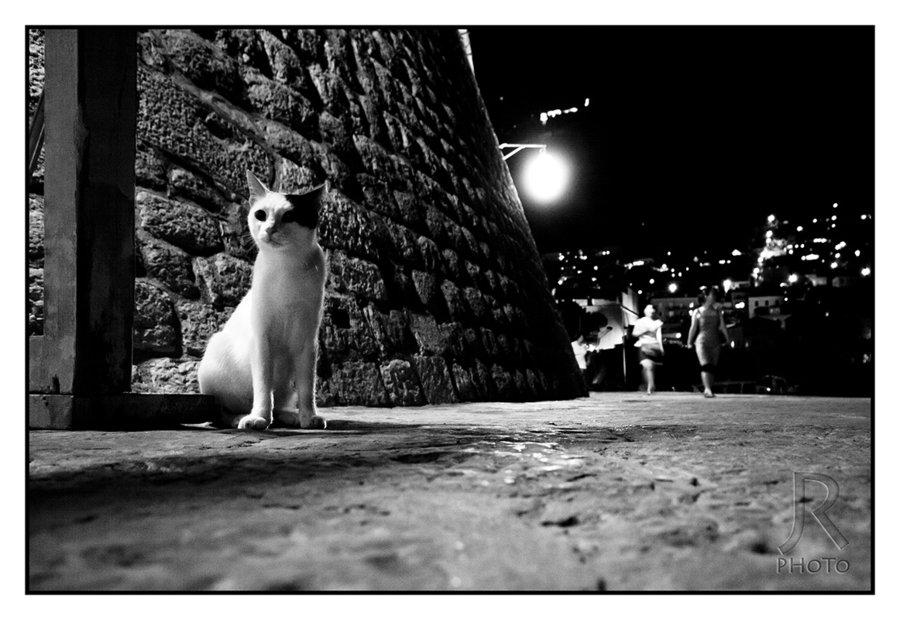 cats_of_dubrovnik_16_jan-rockar