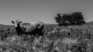 Thomas-h-steer