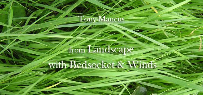 Tony Mancus